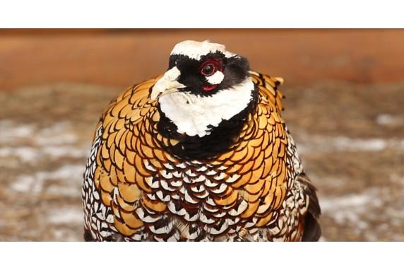 Весенние новоселье птиц