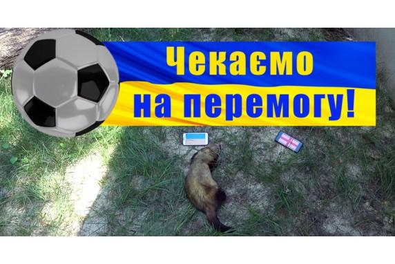 Ukraine will win!