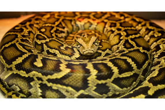 International day of snakes