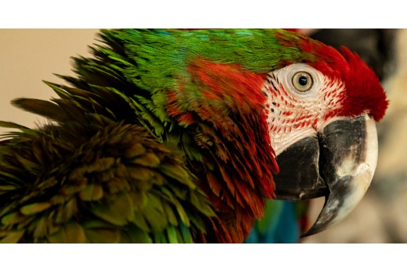 The parrot that started it all