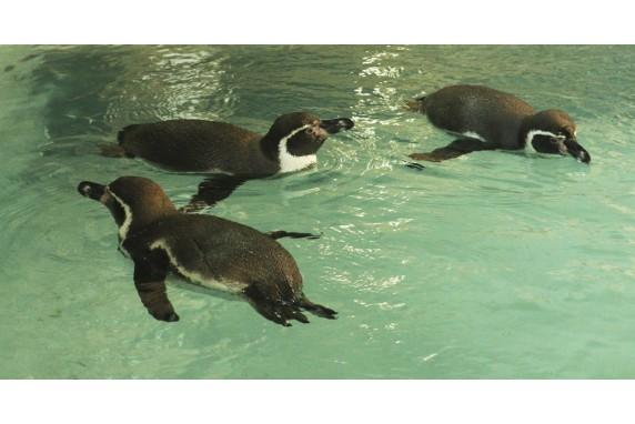 Приключение пингвинов в Харькове